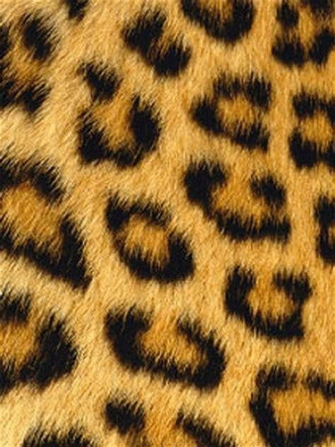 furry zebra print wallpaper for walls furry leopard print wallpaper iphone blackberry