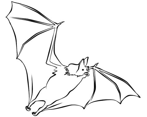 coloring page bat free printable bat coloring pages for kids