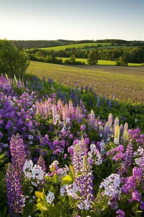 Garten Und Pflanzen 2307 by 32 Besten Plants And Flowers Bilder Auf Erste