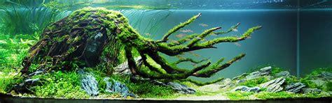 driftwood aquascape aquascaping on pinterest aquascaping planted aquarium