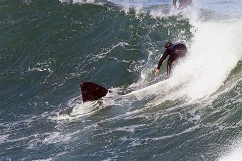 boat crash shark surfer nearly collides with whale while catching the same
