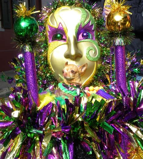 friendly hotels new orleans 34 best images about new orleans hotels on