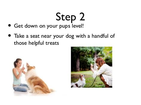 how to house break dog how to train your dog 2