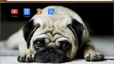 pug theme for google chrome pug chrome themes themebeta