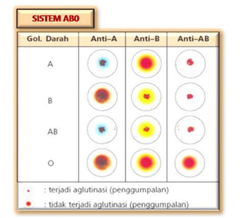 Serum Untuk Tes Golongan Darah pemeriksaan golongan darah tes darah lengkap