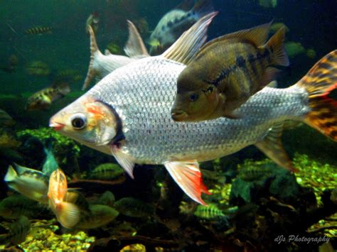 amazon fish teeming with life path pictures