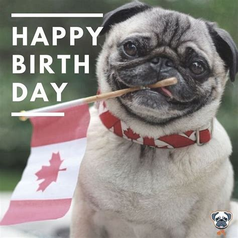 how to make your pug happy best 25 happy birthday pug ideas on pugs pug and pug puppies