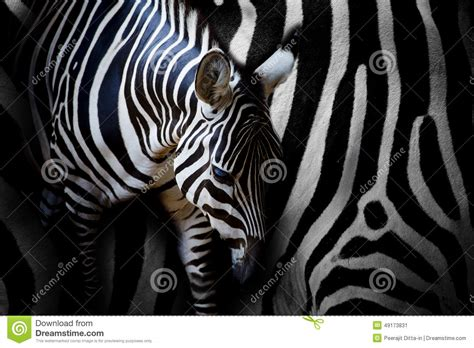 zebra skin color zebra skin color zebra skin design in photoshop