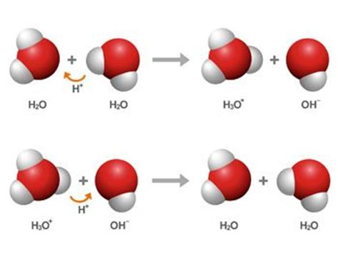 Proton Acceptor by Acids And Bases Proton Donor Acceptor Chemistry