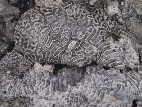 fossil keyper shoer coral a typical day on san salvador island wittenberg