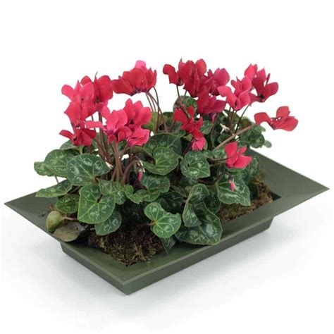 best indoor flowering plants best indoor flowering plants 25 best indoor plants