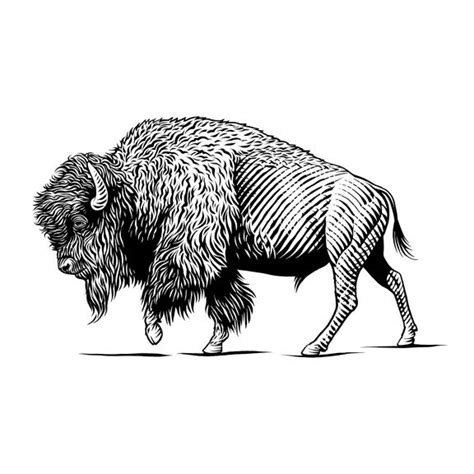 tattoo ink animal ingredients the 25 best bison tattoo ideas on pinterest
