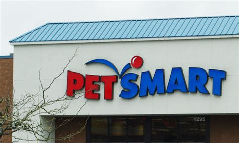 brings puppies to owner pit bull owner brings in muzzled to hyannis pet smart that previously attacked a