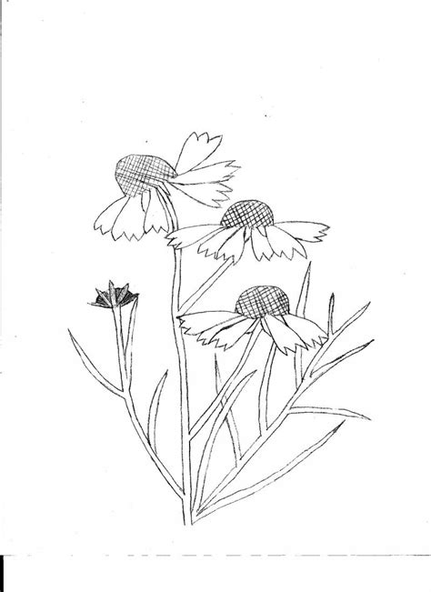 coloring pictures of wildflowers free coloring pages of wildflowers drawing