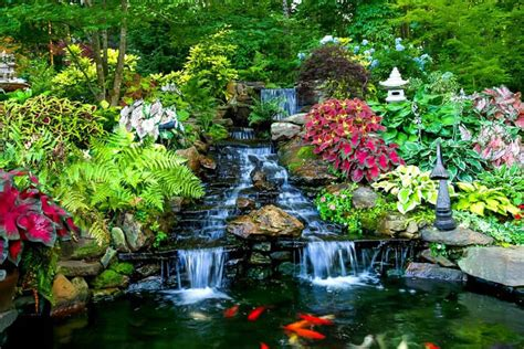 Aquatic Gardens by Animate Your Landscape With Waterfalls Koi Ponds Aquatic