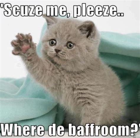 Cat Memes Cute
