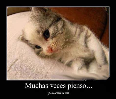 imagenes tiernas de gatitos con frases de amor 45 im 225 genes de gatitos tiernos con frases y mensajes