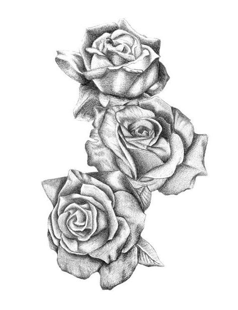 three roses tattoo collection of 25 sketch