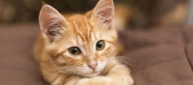 la mission des chats dans notre vie