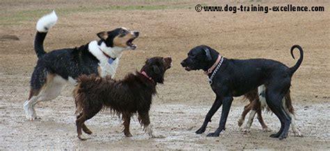 when do puppies start barking start a walking business 3 steps to success