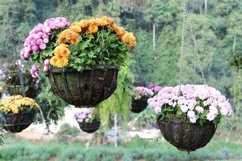 photograph hanging ideas 70 hanging flower planter ideas photos and top 10