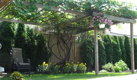 pergola design ideas grape vine pergola picture stylish