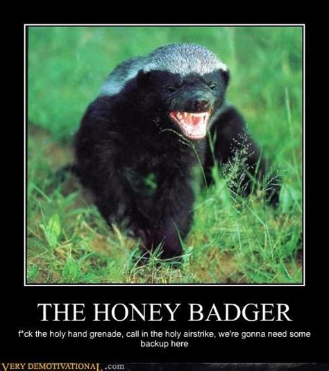 Badger Memes - honey badger holy hand grenade badger pinterest