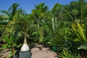 Outside Plants by Palms Related Keywords Amp Suggestions Palms Long Tail