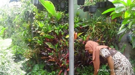 Jual Lu Hias Jalan jual tanaman sekaligus jasa pembuatan taman 3