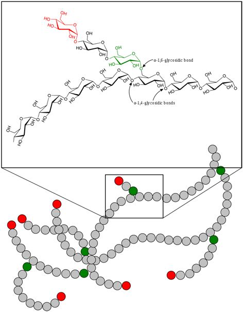 carbohydrates glycogen file glycogen svg wikibooks open books for an open world
