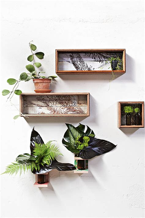 interior plant wall indoor plants shadow boxes hanging wall blomster