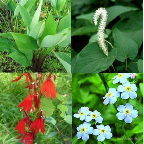 flowering shrub collection part shade flowering hardy bog plant collection happy