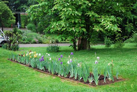 giardino botanico rea la collezione di iris giardino botanico rea