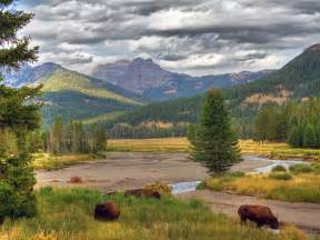 yellowstone national park the natural beauty of the yellowstone national park