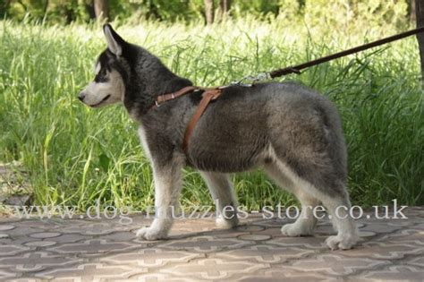 what age to start leash a puppy puppy to a lead to a leash the best muzzles