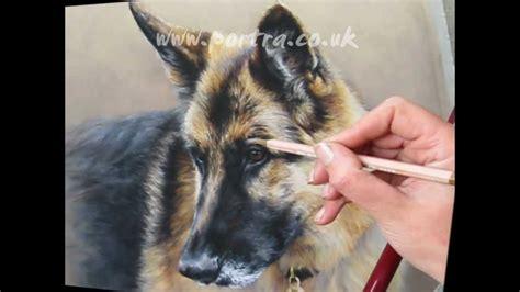 speed painting dog  pastels german shepherd youtube
