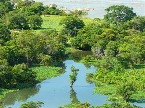 imagenes de amazonas venezuela amazonas el pulm 243 n del planeta megapost taringa