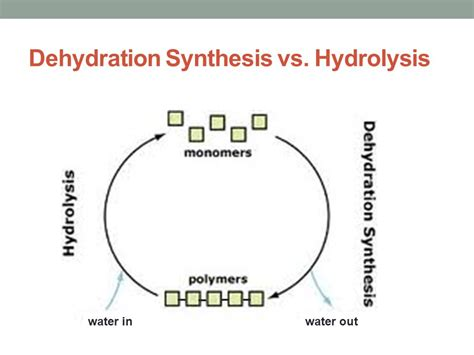 dehydration synthesis what do the following equations represent ppt