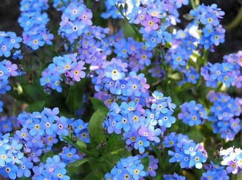Tanaman Cattail Bulrush daftar nama ilmiah tumbuhan tanaman bibitbunga