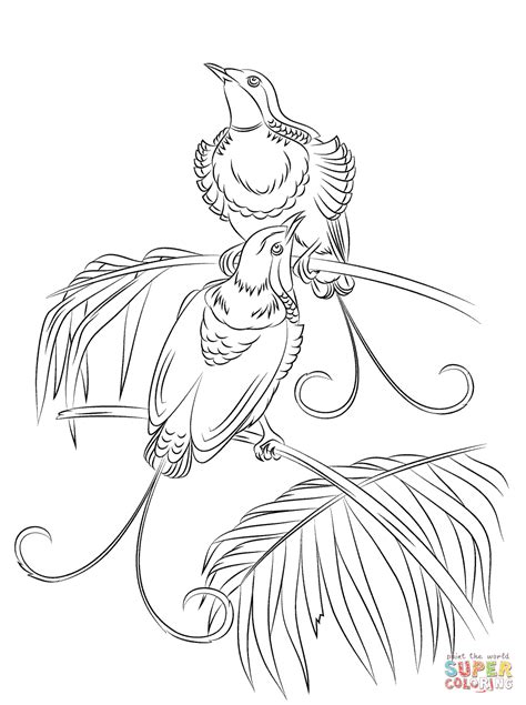 coloring pages bird of paradise king of hollands bird of paradise coloring page free