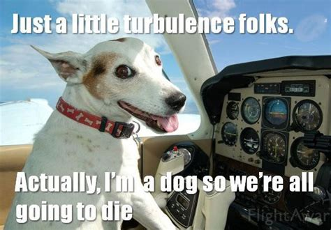funny dog memes  top    time  world wide interweb