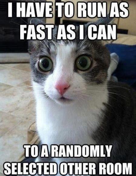 Internet Cat Meme - best cat memes on the internet top mobile trends