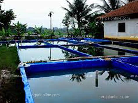 Jual Kolam Terpal Plastik kolam terpal plastik terang jaya