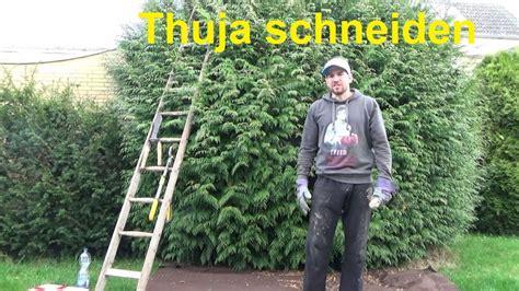 Hecke Thuja Schneiden by Gro 223 E Thuja Schneiden Thuja Hecke Schneiden Konifere