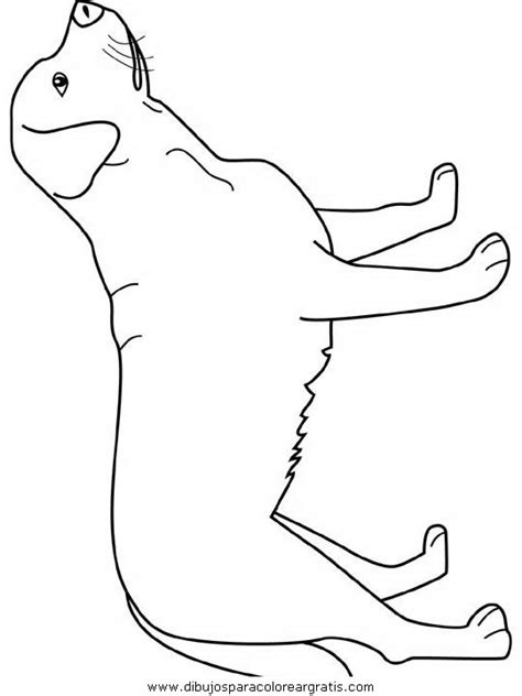 mountain dog coloring page free coloring pages of heeler