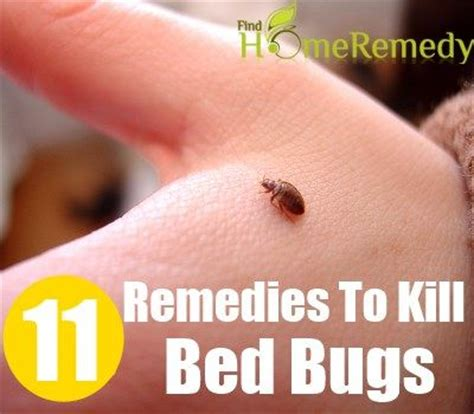 Bed Bug Home Remedy by 11 Home Remedies To Kill Bed Bugs Health Home Remedies