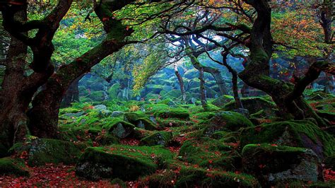 forest desktop backgrounds   pixelstalknet