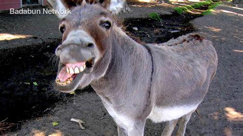 buro animal dios creo al burro y le dijo