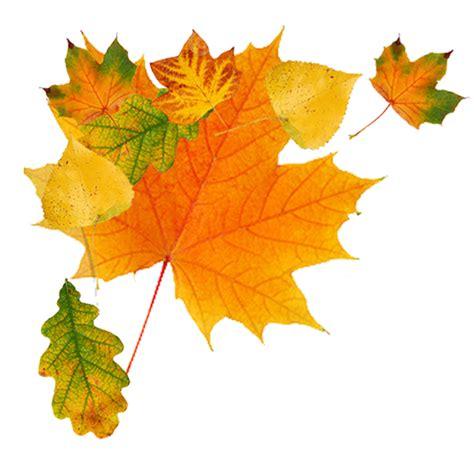 autumn leaves testo herfst culinaire producties