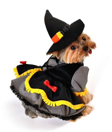 costumes for small dogs small costumes costumes clothes for small dogs